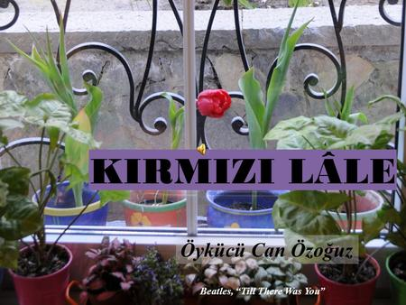 "KIRMIZI LÂLE Öykücü Can Özoğuz Beatles, ""Till There Was You"""
