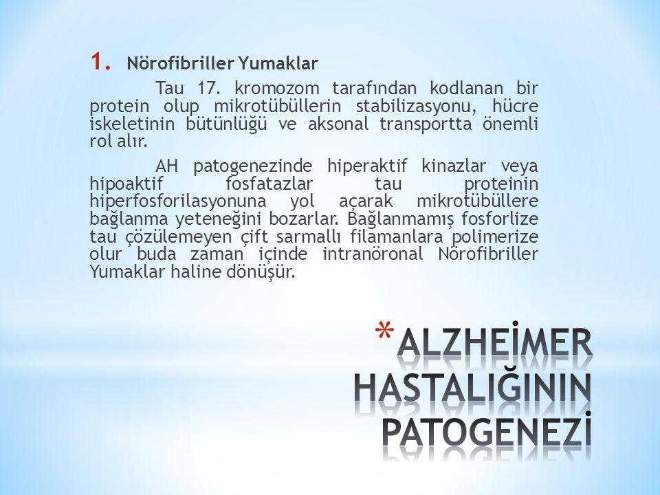 Şekil 1. Mikrotübül asosiye Tau proteinin NFY'ye dönüşümü