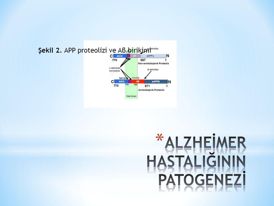 4.Nöron Kaybı Nöronlar doğumdan sonra sayıları artmayan hücreler olarak bilinmektedir.