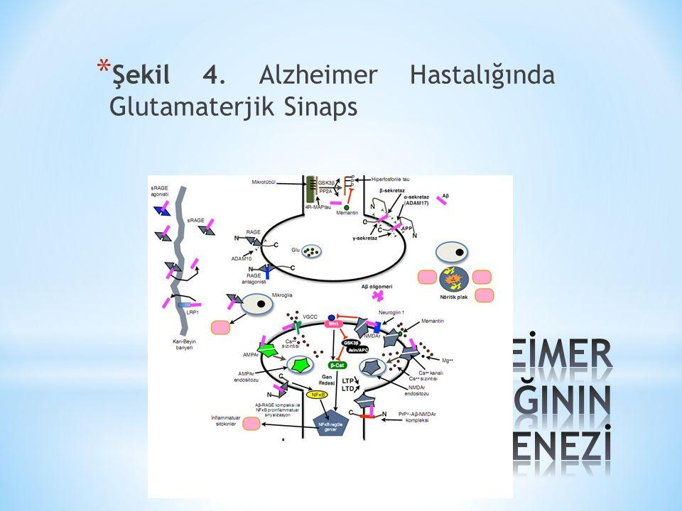 Şekil 5. Alzheimer Hastalığında Kolinerjik Sinaps