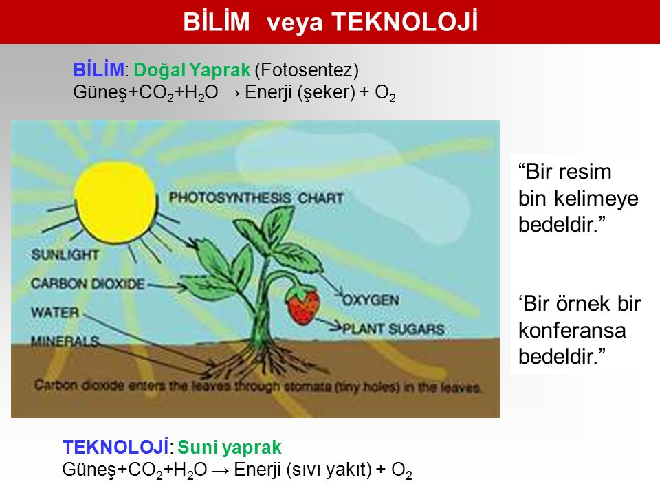 Yapay Yapraklar http://www.nytimes.com/2011/05/22/business/22novel.html?_r=2 ONLY God can make a tree, the poem says.