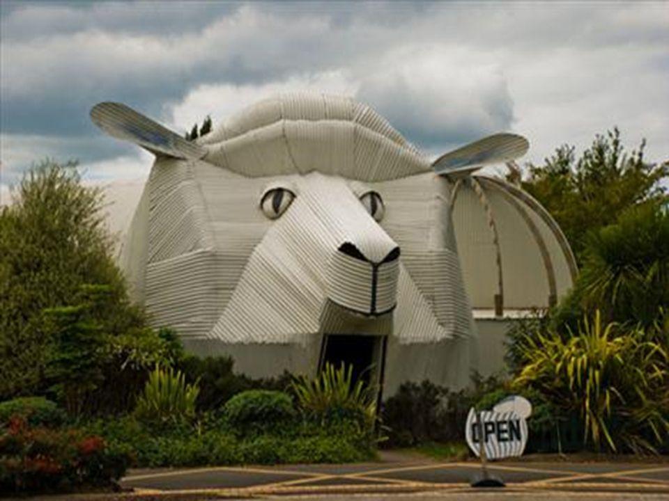 29.05.2016BÜLENT FATİN ÖZMEN 23 04 2009 17)Çoban Köpeği (Yeni Zelanda)