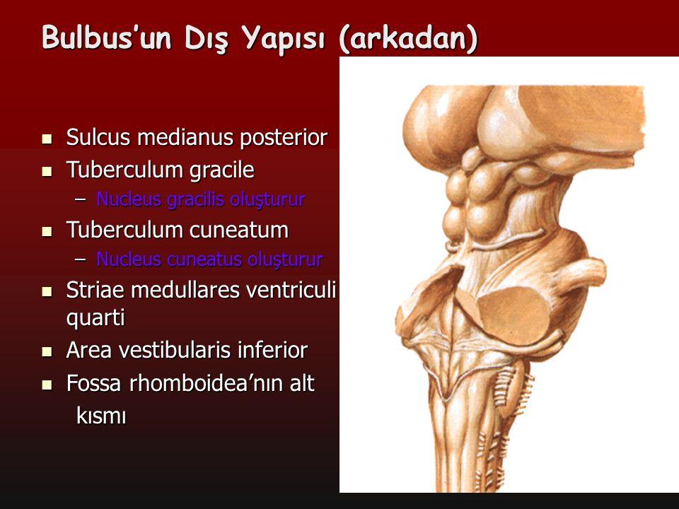 11 Bulbus kesitlerinde görülen çekirdekler Nucleus nervi hypoglossi;n.hypoglossus'un motor nucleus'u, Nucleus nervi hypoglossi;n.hypoglossus'un motor nucleus'u, Nucleus gracilis ve nucleus cuneatus; Şuurlu proprioseptif, vibrasyon ve iki nokta ayrımı duyularının ikinci nöronlarının bulunduğu çekirdektir.
