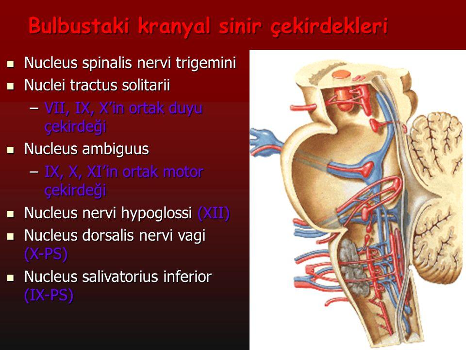 15 a Tractus corticospinalis'in %90'ı burada çaprazlaşır Decussatio pyramidum'da çaprazlaşanlara: Tractus corticospinalis lateralis Decussatio pyramidum'da çaprazlaşmayanlara: Tractus corticospinalis anterior Hiç çaprazlaşmayanlara: Tractus corticospinalis intermedius