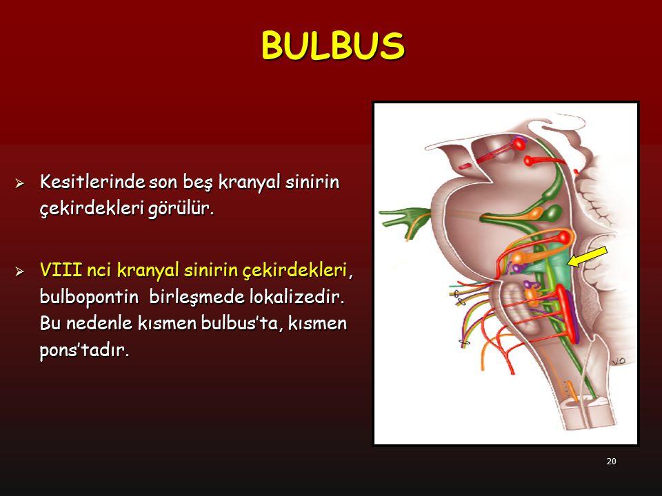 21  Nucleus spinalis nervi trigemini  Nuclei vestibulares  Nuclei cochleares  Nucleus ambiguus  Nucleus tractus solitarius  Nucleus salivatorius inferior  Nucleus dorsalis nervi vagi  Nucleus nervi hypoglossi  Nucleus nervi accessorii BULBUS