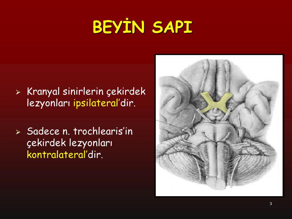 4  Sulcus pontocruralis'ten terk eden 3  Beyin sapını arka yüzden terk eden 4  Pons'un ön- yan bölümünden terk eden 5  Sulcus bulbopontinus'tan terk eden 6, 7, 8  Sulcus retroolivaris'ten terk eden 9, 10, 11  Sulcus anterolateralis'ten terk eden 12 BEYİN SAPI