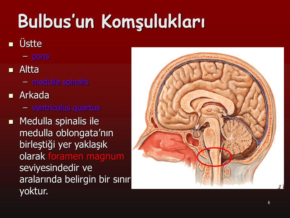 7 a Ayrıca 1.servikal spinal sinirin çıktığı yer, ikisi arasındaki sınır olarak kabul edilir.