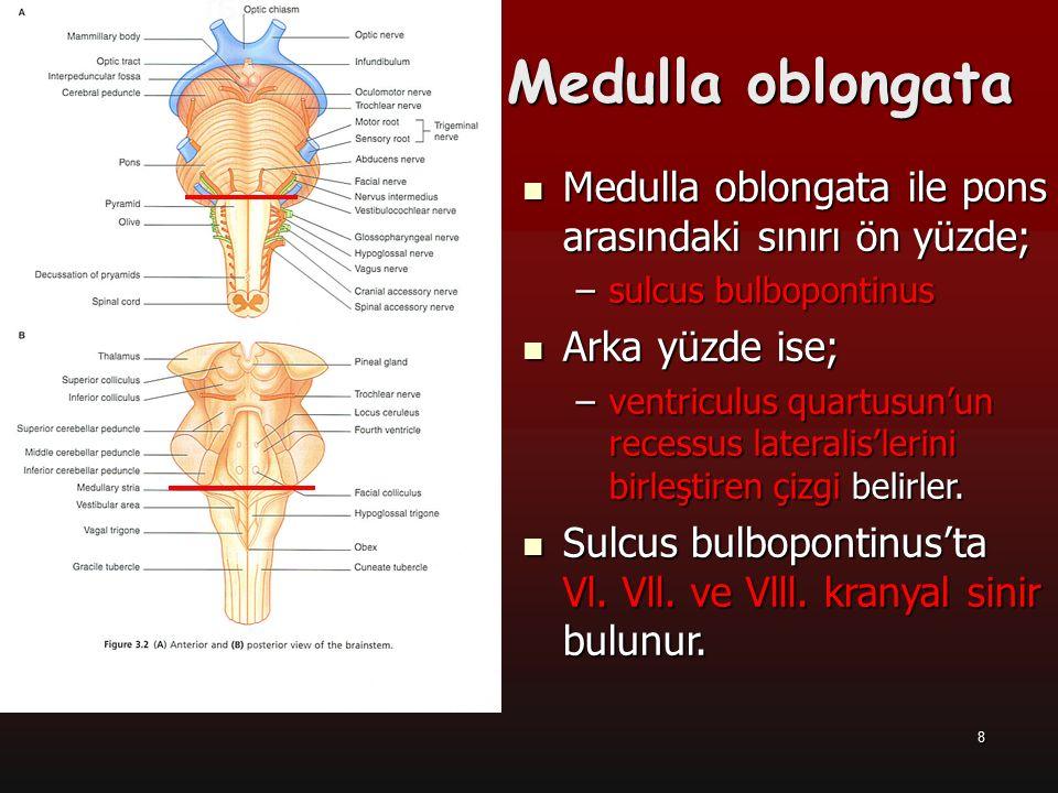 9 Bulbus'un Dış Yapısı (önden) Fissura mediana anterior Fissura mediana anterior Pyramis bulbi (Pyramis) Pyramis bulbi (Pyramis) Fibrae corticospinalis Fibrae corticospinalis Fibrae corticonucleares Fibrae corticonucleares Decussatio pyramidum Decussatio pyramidum Sulcus anterolateralis Sulcus anterolateralis –N.