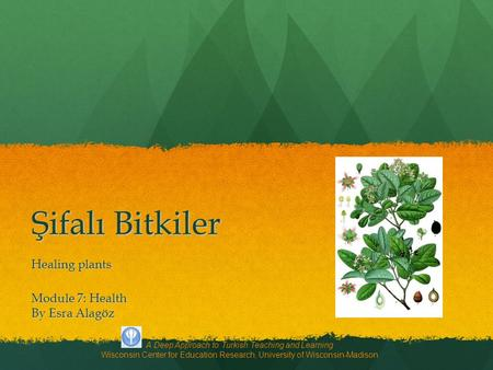Şifalı Bitkiler Healing plants A Deep Approach to Turkish Teaching and Learning Wisconsin Center for Education Research, University of Wisconsin-Madison.