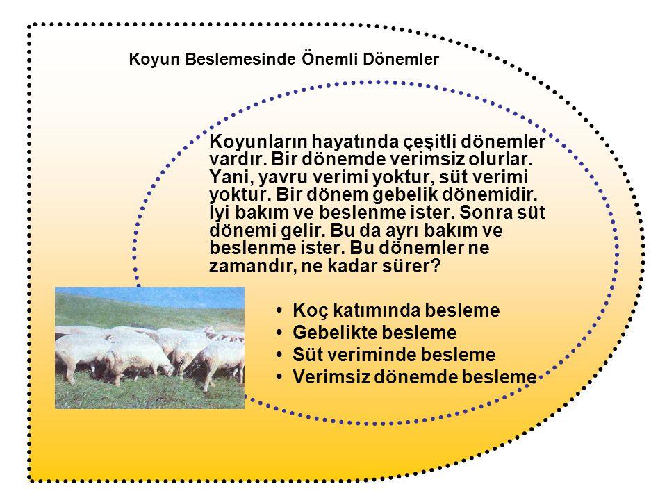 Koyunlar koça verildikleri dönemde gayet sağlıklı ve vücut ağırlıkları bakımından uygun olmalıdırlar.