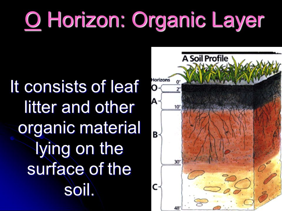 A Horizon: Topsoil A Horizon: Topsoil This layer is usually loose and crumbly with varying amounts of organic matter.