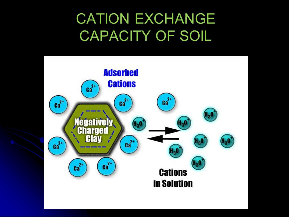 Importance of Cation Exchange Cation exchange at negative sites is major retention mechanism for heavy metals, e.g.