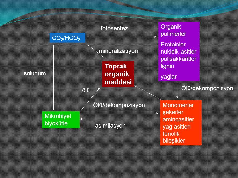 Karbon, bütün organik maddelerde mutlaka bulunan bir maddedir.