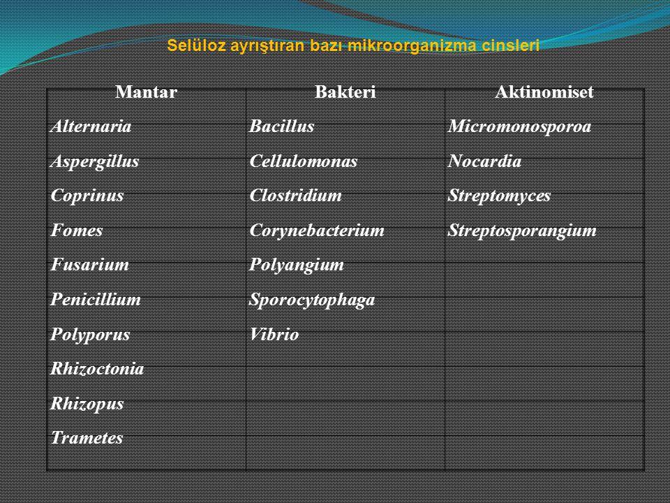 OrganizmaSubstrat Bakteriler BacillusMannan, galaktomannan, ksilan CytophagaGalaktan PseudomonasKsilan StreptomisetlerMannan, ksilan Mantarlar AlternariaArabinoksilan, ksilan AspergillusAraban, mannan, arabinoksilan FusariumAraban, arabinoksilan PenicilliumAraban, mannan Hemiselülozu ayrıştıran organizmalar