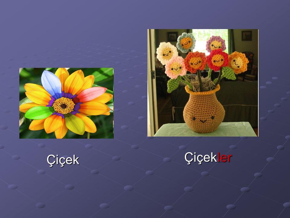 Çiçek Çiçekler