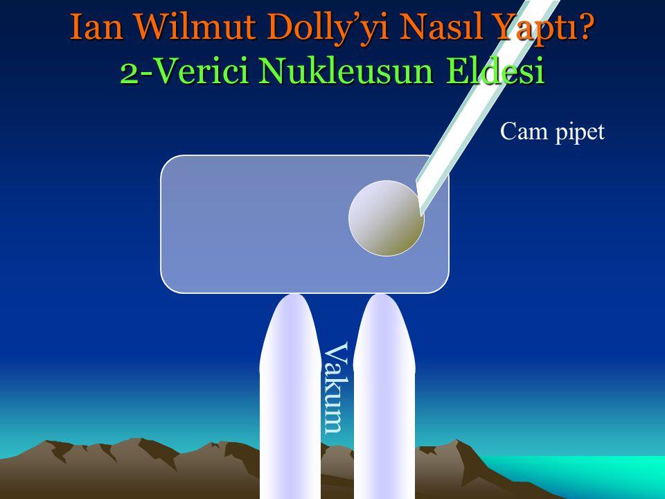 Vakum Cam pipet Ian Wilmut Dolly'yi Nasıl Yaptı? 2-Verici Nukleusun Eldesi