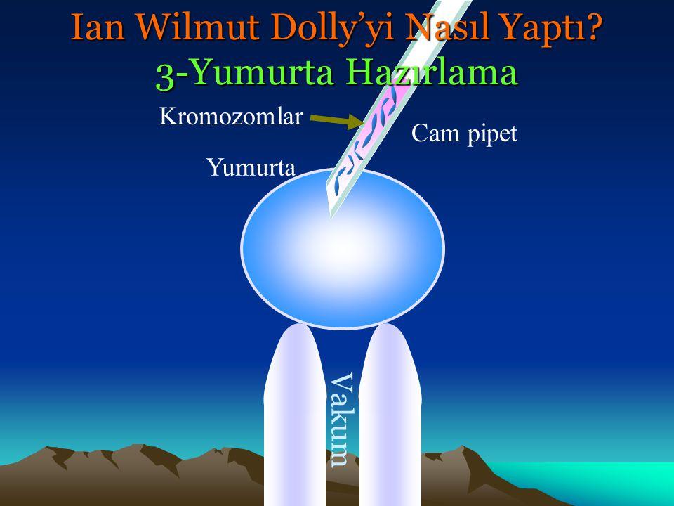 Vakum Cam pipet Ian Wilmut Dolly'yi Nasıl Yaptı? 4-Verici Nukleusun Hücreye Sokulması