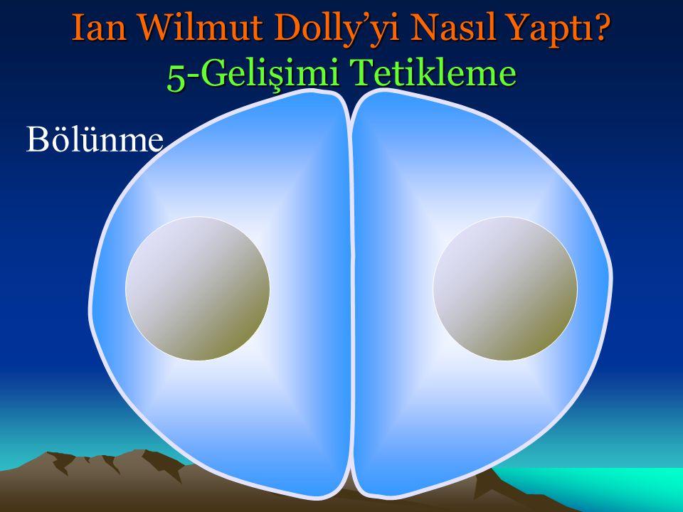 Bölünme Ian Wilmut Dolly'yi Nasıl Yaptı? 5-Gelişimi Tetikleme