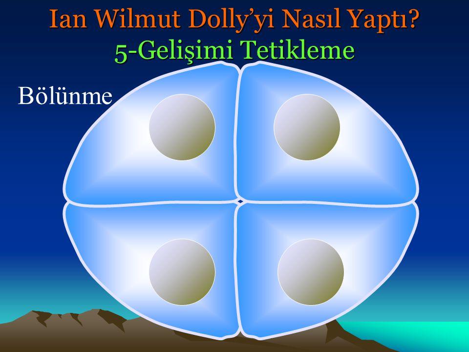 Morula Ian Wilmut Dolly'yi Nasıl Yaptı? 5-Gelişimi Tetikleme