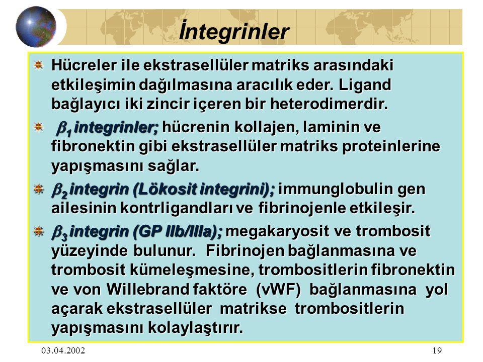 03.04.200220 İmmunglobulin Gen Ailesi; Lökosit ve trombositlerdeki integrinler için endotelyal bağlantı yerleri olarak fonksiyon görür.