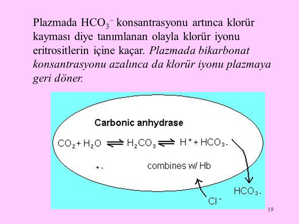 20 Klorürün işlevleri: plazma ozmotik basıncının düzenlenmesine katkıda bulunur asit-baz dengesinin düzenlenmesinde rol alır