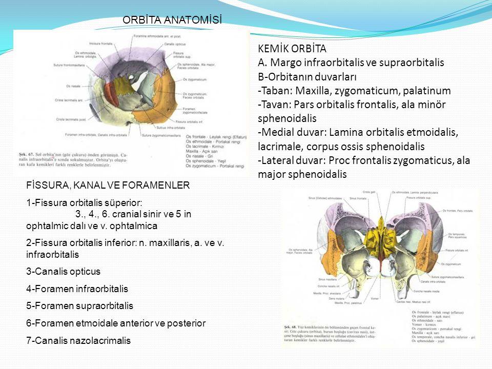 ORBİTANIN SİNİRLERİ A.Nervus ophtalmicus -n. lacrimalis -n.
