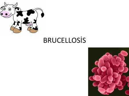 BRUCELLOSİS.