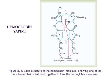 Figure 32-6 Basic structure of the hemoglobin molecule, showing one of the four heme chains that bind together to form the hemoglobin molecule. Downloaded.