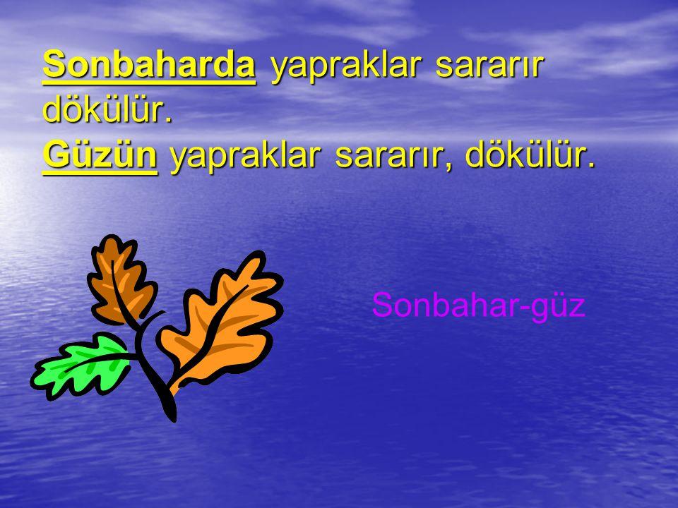 Sonbaharda Sonbaharda yapraklar sararır dökülür.Güzün Güzün yapraklar sararır, dökülür.