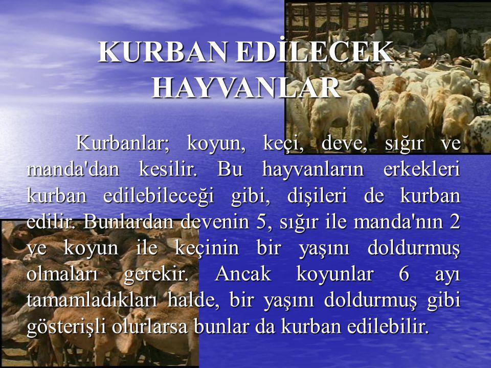 KURBANIN SAHİH OLMASININ ŞARTLARI a) Kurban edilecek hayvanın kurban olmasına mani kusurlarının bulunmaması, b) Kurbanın vaktinde kesilmiş olması.
