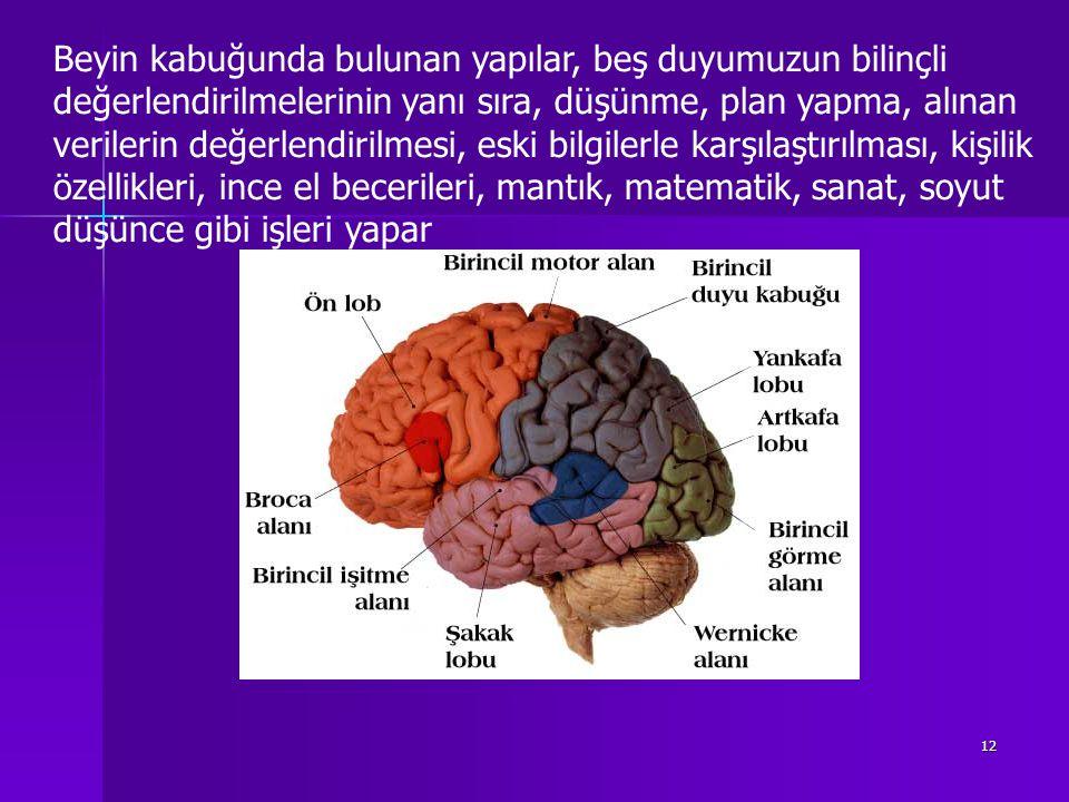12 Beyin kabuğunda bulunan yapılar, beş duyumuzun bilinçli değerlendirilmelerinin yanı sıra, düşünme, plan yapma, alınan verilerin değerlendirilmesi, eski bilgilerle karşılaştırılması, kişilik özellikleri, ince el becerileri, mantık, matematik, sanat, soyut düşünce gibi işleri yapar