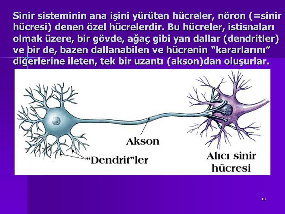 13 Sinir sisteminin ana işini yürüten hücreler, nöron (=sinir hücresi) denen özel hücrelerdir.