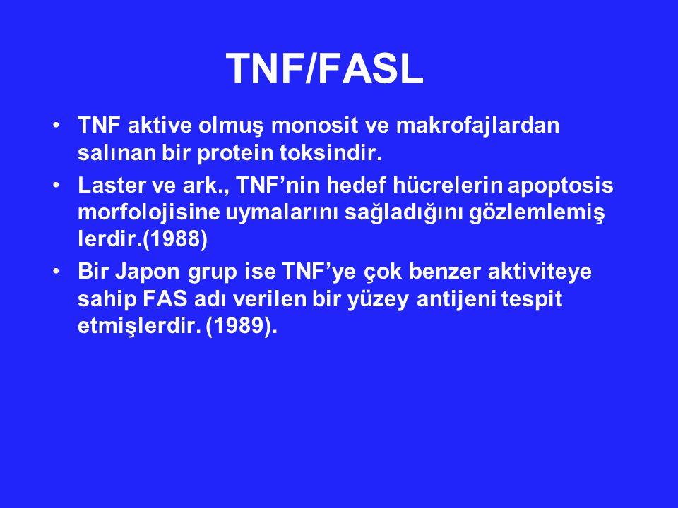 TNF/FASL TNF and FasL 'nin fonksiyonel ve solubl formları trimerler olarak bulunur..