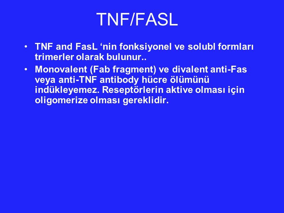 TNFR/FAS 1990'da,bir çok grup aynı anda iki TNF reseptörü bulmuştur.