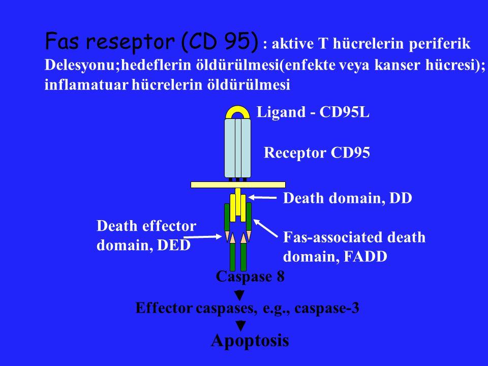 TRAIL reseptor (DR5) :Fas reseptore benzeyen TNF aile üyesidir; tümör hücrelerinde apoptosisi tetikler; bir çok dokuda esastır;HIV-enfekte hücrelerin öldürülmesinde kaspaz bağımsız FADD yoluna ihtiyaç duyar.