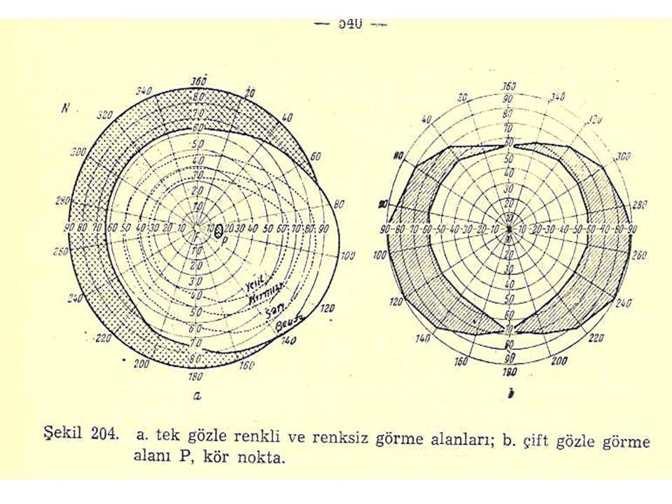 Skotom: Görme alanı içinde çevresinden daha düşük retinal duyarlılığa sahip alanlardır.