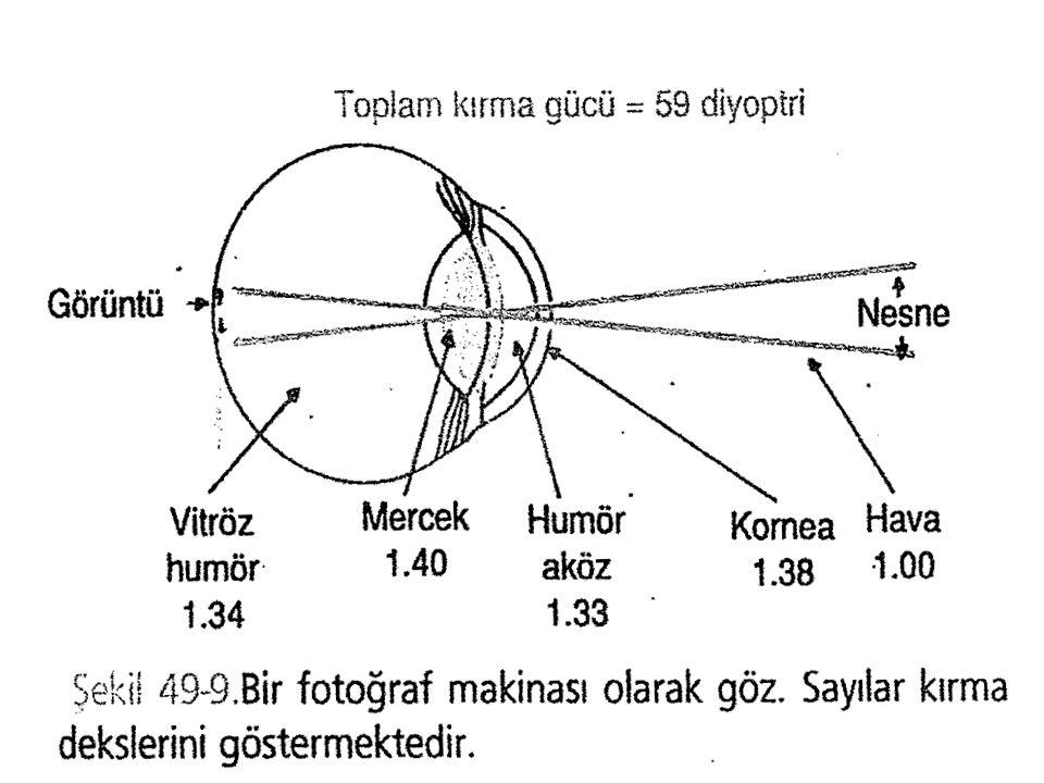 Normal bir gözde tüm kırıcı yüzeyler tek bir mercek gibi düşünüldüğünde (şematik göz) kırıcılık 59D dir.