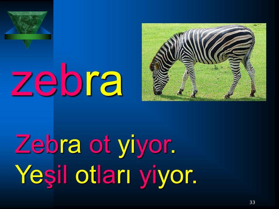 33 zebra Zebra ot yiyor. Yeşil otları yiyor.