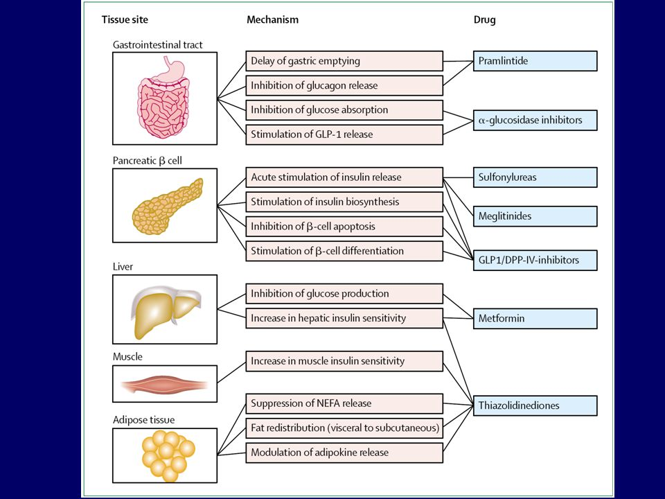 İnsülin Duyarlılaştırıcı İlaçlar Metformin Tiazolidindionlar