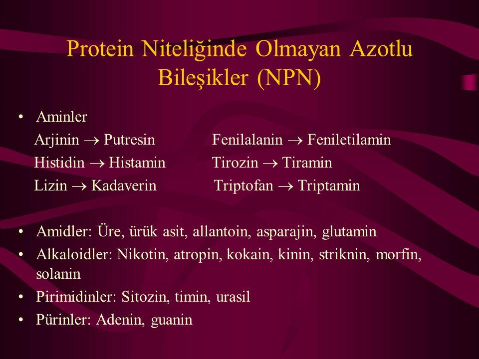 Protein Niteliğinde Olmayan Azotlu Bileşikler (NPN) Kök, yumru, soğan gibi bitki depo kısımlarında Olgunlaşmakta olan tane ve tohumlarda Vejetasyon dönemi başlarındaki çayır ve meralarda