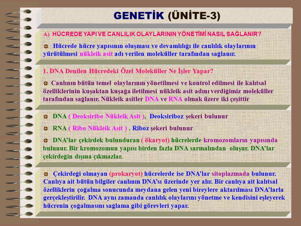 a) DNA Molekülünün Yapısı Nasıldır.