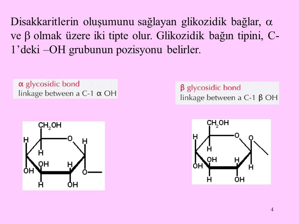 5 C-1'deki –OH grubunun pozisyonu  pozisyonu ise  - glikozidik bağ,  pozisyonu ise  -glikozidik bağ oluşur.