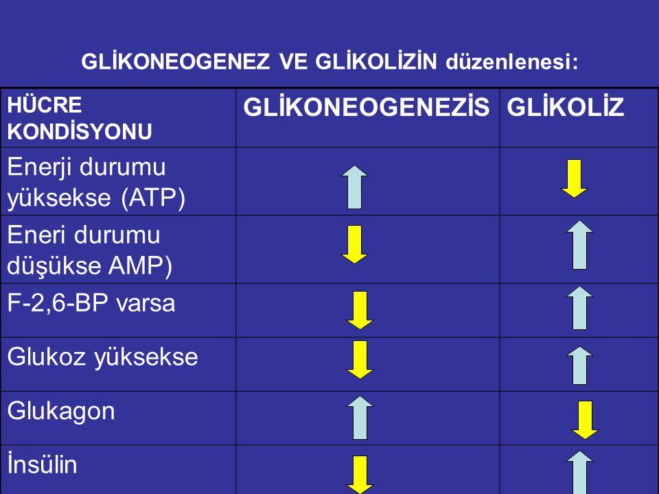 GLİKONEOGENEZ VE GLİKOLİZİN düzenlenesi: HÜCRE KONDİSYONU GLİKONEOGENEZİSGLİKOLİZ Enerji durumu yüksekse (ATP) Eneri durumu düşükse AMP) F-2,6-BP varsa Glukoz yüksekse Glukagon İnsülin