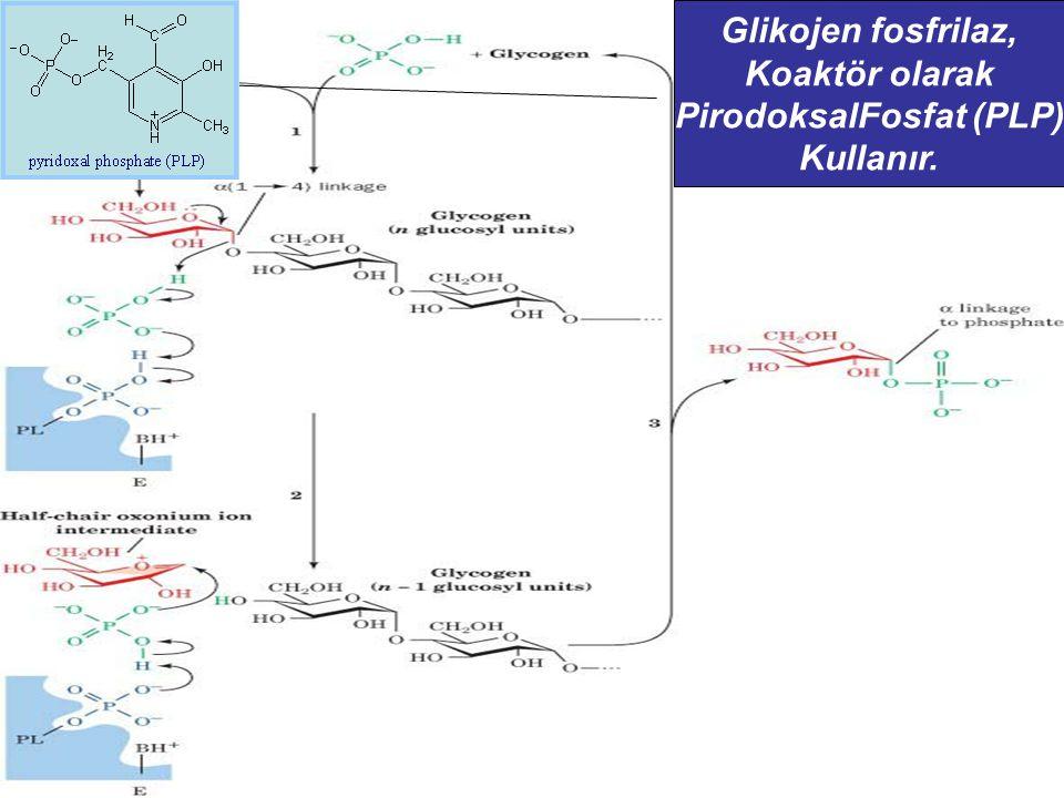 Glikojen fosfrilaz, Koaktör olarak PirodoksalFosfat (PLP) Kullanır.
