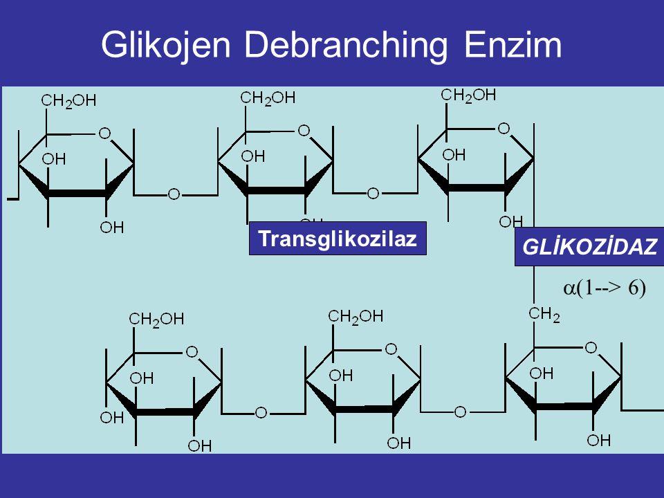  (1--> 6) Glikojen Debranching Enzim Transglikozilaz GLİKOZİDAZ