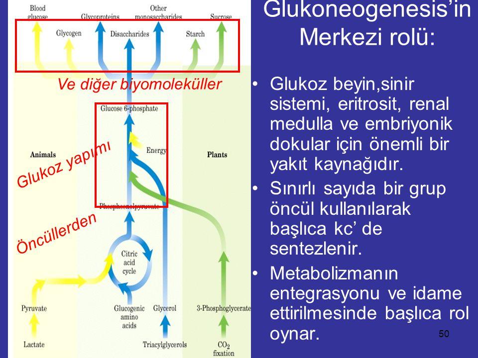 04.11.0550 Glukoneogenesis'in Merkezi rolü: Glukoz beyin,sinir sistemi, eritrosit, renal medulla ve embriyonik dokular için önemli bir yakıt kaynağıdır.