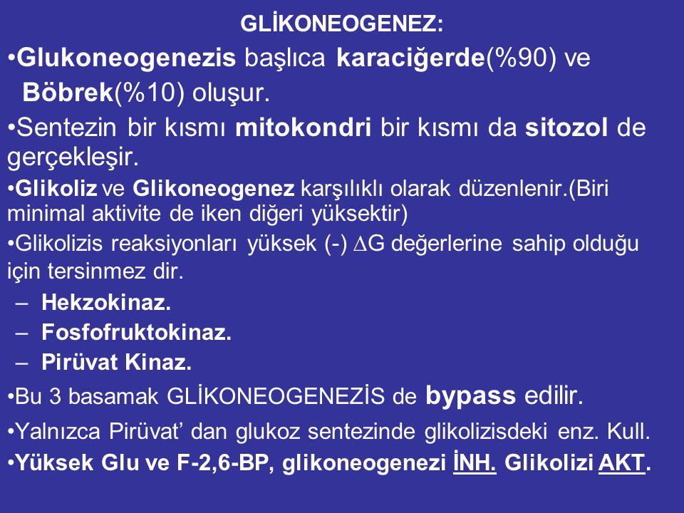 GLİKONEOGENEZ: Glukoneogenezis başlıca karaciğerde(%90) ve Böbrek(%10) oluşur.