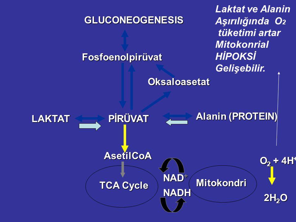Fosfoenolpirüvat Oksaloasetat PİRÜVAT LAKTAT AsetilCoA TCA Cycle Mitokondri NAD + NADH O 2 + 4H + 2H 2 O GLUCONEOGENESIS Alanin (PROTEIN) Laktat ve Alanin Aşırılığında O 2 tüketimi artar Mitokonrial HİPOKSİ Gelişebilir.