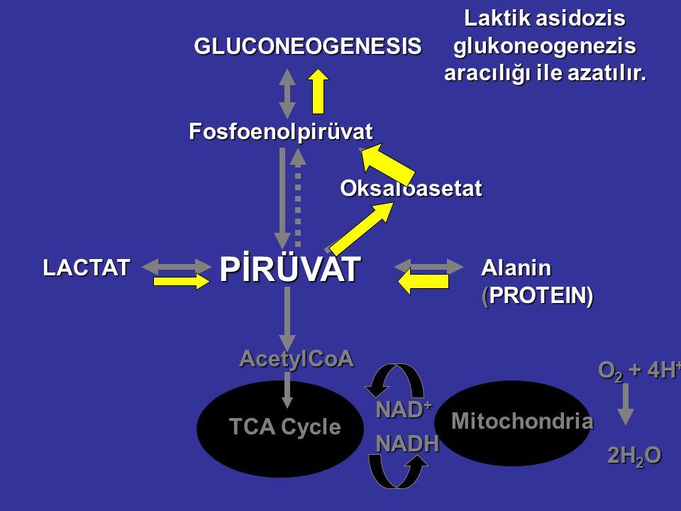 Fosfoenolpirüvat Oksaloasetat PİRÜVAT LACTAT AcetylCoA TCA Cycle Mitochondria NAD + NADH O 2 + 4H + 2H 2 O GLUCONEOGENESIS Laktik asidozis glukoneogenezis aracılığı ile azatılır.