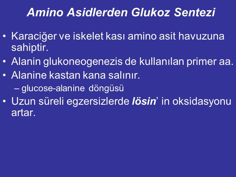 Amino Asidlerden Glukoz Sentezi Karaciğer ve iskelet kası amino asit havuzuna sahiptir.